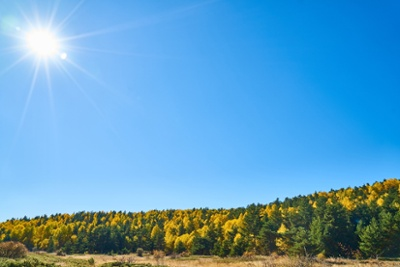 autumn-2954795_1920-1