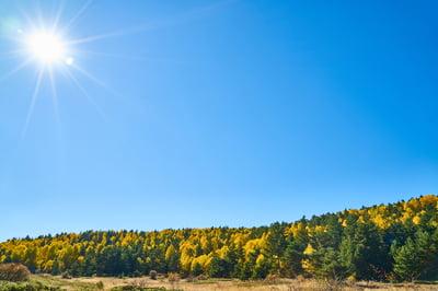 autumn-2954795_1920