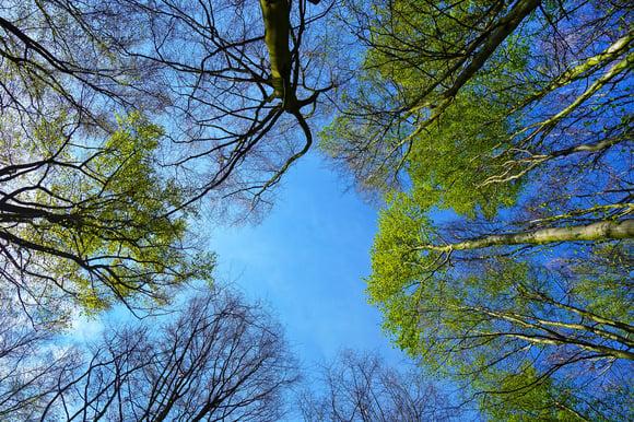 tree-3353617_1920
