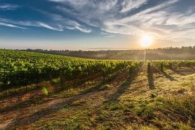 vineyard-428041_640